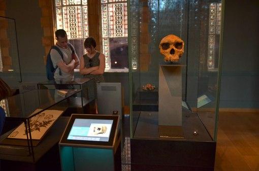 NHM_skullcase