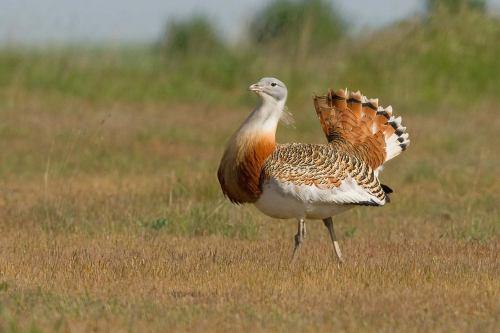 Image from Mike Ashforth, Birding Yorshire