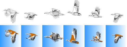 illustrated bustard