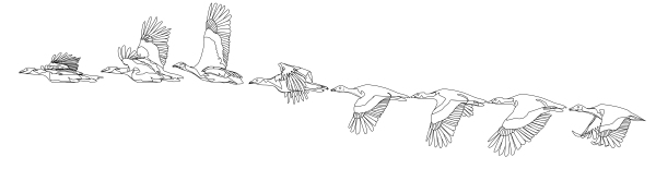 The _llustrated_bustard-03