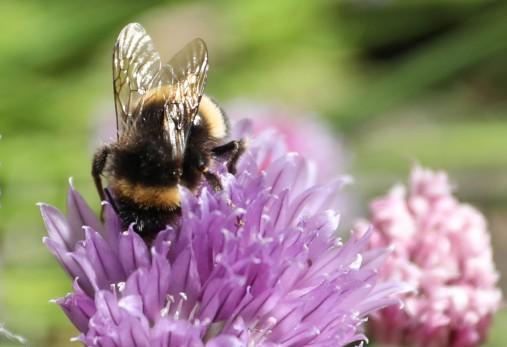 BeesKnees.jpg